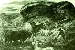 Cattle thieving or 'reiving' - a Highland clan way of life