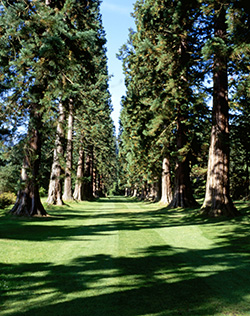Benmore Botanic Garden, the 'Avenue of Giant Redwoods'